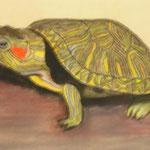 La tortue - 35x45