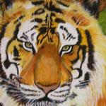 Le tigre     46x55  N'est plus disponible