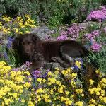 Eiko in seinem Garten