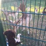 Eika | Hirsche sind doch einfach zum Knutschen.........
