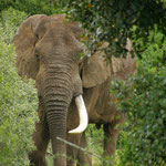 Südafrika Addo Elephant Park