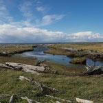 Da leben die Humboldt-Pinguine bei Punta Arenas
