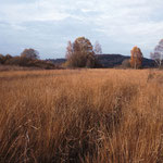 Das Mähgut  von Streuwiesen wurde als Einstreu im Stall verwendet. Sie stehen auf staunassen Standorten und setzen sich aus Pflanzen zusammen, die nicht an Tiere verfüttert werden können. Sie sind ein typisches Kulturlandschaftselement in der Region.
