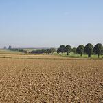 Baumreihe bei Schaidenhausen