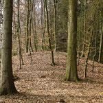 """Aus der Bronzezeit stammen die ältesten Zeugnisse unseres """"kulturlandschaftlichen Archivs"""": kleine und große bronzezeitliche Grabhügelgruppen. Während im Offenland viele durch Pflügen zerstört wurden, konnten sich in Waldgebieten einige erhalten."""