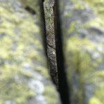 Nägelisgrätli Granit mit Landkartenflechte