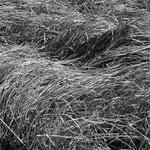 Gletsch Gras