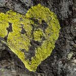 Guttannen Herz aus der Landkartenflechte