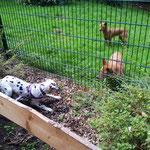 Ich war im Zoo - hier würde ich gerne mit den Dingos spielen