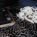 Computerarbeit macht müde