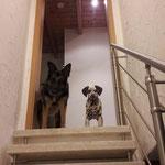 Abby und Kumpeline Ronja beim Warten auf ihre Bauchkrauler