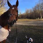 Vor Pferden muss mich keine Angst haben