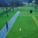 Kleiner Hund in großen Garten
