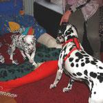 Lieber Besuch für Kingsley. Die große Halbschwester Caylee wird ab Montag die neue Spielgefährtin von ihm werden.