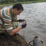 Максеев Даниил проводит биоиндикацию озер,2012
