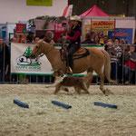 Auftritt Mensch Tier Messe Grazer Stadthalle