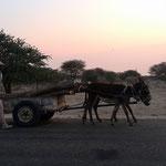 ロバ馬車(セプーパ村)