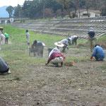 大槌川・河川敷菜の花プロジェクト(2011.8.15)