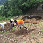 穴をどんどん掘る作業。鍬とスコップを駆使します。