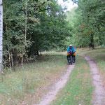 Eben noch eine tolle Strasse, jetzt Fahrweg im Wald.