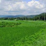 Hokkaido ist sehr, sehr grün.