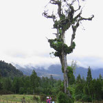 Der Baum ist tot, doch immer noch voller Leben.