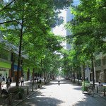 In der 10 Millionen-Stadt gibt es überraschend viel Grün.