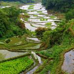 Reisterrassen in der Nähe von Banaue.