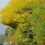 Manchmal machen uns die Herbstfarben einfach sprachlos.