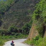Im Hintergrund wird an steilstem Hang Kaffee angebaut.
