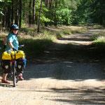 ohne Verkehr durch einsame Wälder