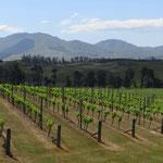 Die Kiwis keltern Wein, der uns mundet. Wir müssen immer wieder probieren.