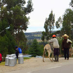 Kleinbauern bringen die Milch ihrer wenigen Kühe mit Eseln zur Strasse, wo sie ein Lastwagen abholt.