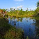 Mehr als 50% der Landfläche von Belize stehen unter Naturschutz.