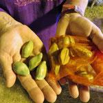 Auf dem Kulturfest in Ayutthaya wird Muschelgeld ausgegeben. 1 Muschel = 10 Bat.