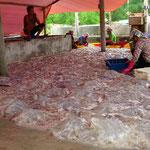 Hier werden grosse Quallen sortiert und beschnitten. Auch sie stehen auf dem Speiseplan der Vietnamesen.