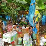 Geerntete Bananen werden verpackt und gleich auf Lastwagen verladen.