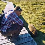 Manche Wombats haben sich an die Menschen gewöhnt, zeigen kaum mehr Scheu.