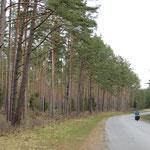 Einsame, aber sehr gute Strassen in Estland.