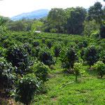 Rund um Pitalito gibt es viele Kaffeeplantagen.