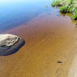 Das Wasser ist wegen des moorigen Bodens braun, aber absolut sauber.