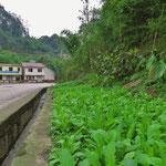 Noch auf kleinsten Flächen wird Gemüse angebaut. Hier entlang der (vielbefahrenen) Strasse.