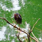 Die Vogelwelt ist farbig und spannend.