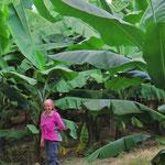 Wer mal muss, muss sich hier in die Bananenplantage schlagen.