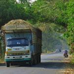 Zuckerrohr neben und auf der Strasse. Täglich begegnen uns mehr als hundert dieser Lastwagen.
