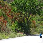 Bäume! Ja sogar rot blühende Bäume! So schön, soviel Grün!