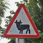 Usbekische Kuh. Über die verschiedenen Warnschilder könnte man ein Buch schreiben.