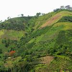An steilsten Hängen wird Kaffee angebaut.
