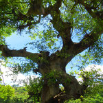 Es gibt im Land auffallend viele grosse Bäume.