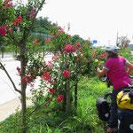Schönheiten an der Strasse, die uns Radfahrern besonders auffallen.